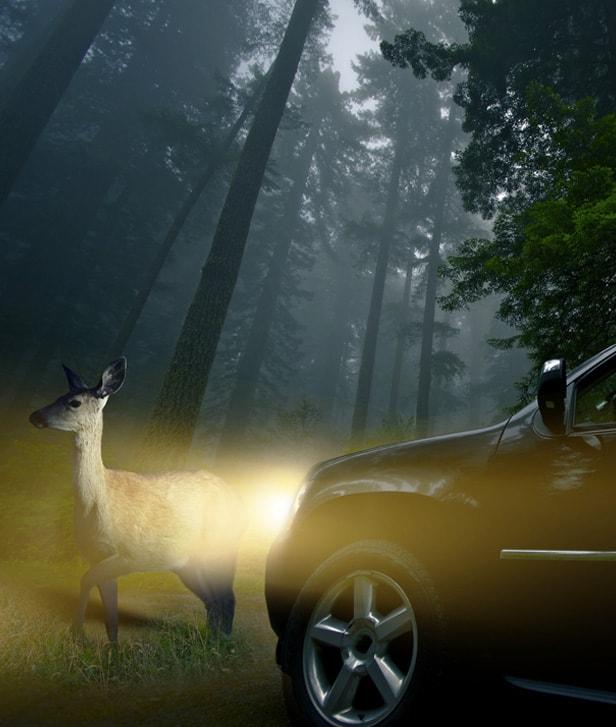 Dallas Deer Car Accident Attorney